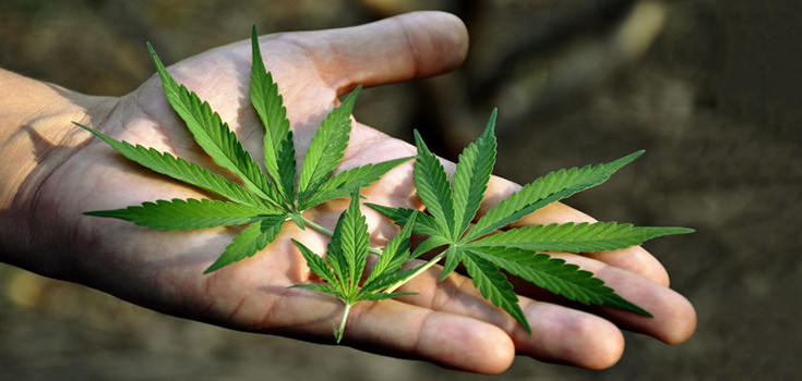 Marijuana Kills Cancer, Says National Cancer Institute