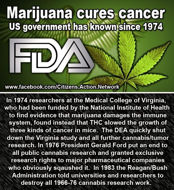 National Cancer Institute Quietly Confirms Cannabis Can Cure Cancer