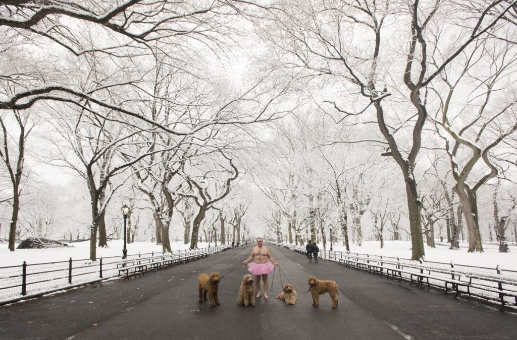 Four Dogs, Central Park. Manhattan, New York