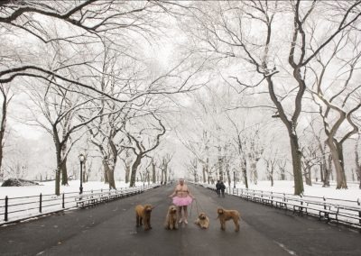 Four Dogs, Central Park. Manhattan, New York