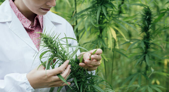 U.S. Government finally admits that cannabis destroys cancer cells and protects healthy cells