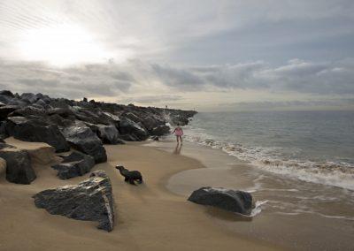 Highway the Sea Lion. Newport Beach, California