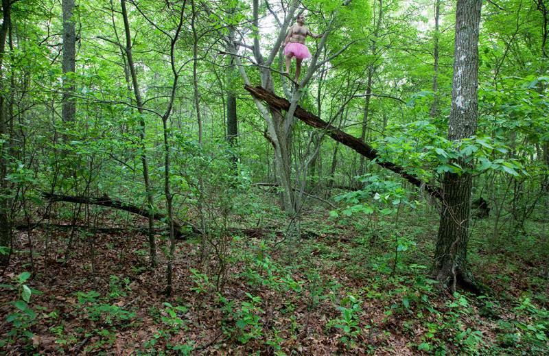 Fallen Tree. Long Island, New York.