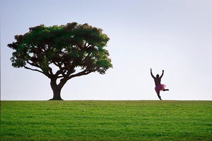 Malibu Tree #2. Malibu, California