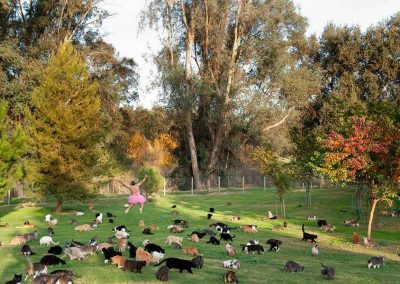 500 Cats. Parlier, California. 2010.
