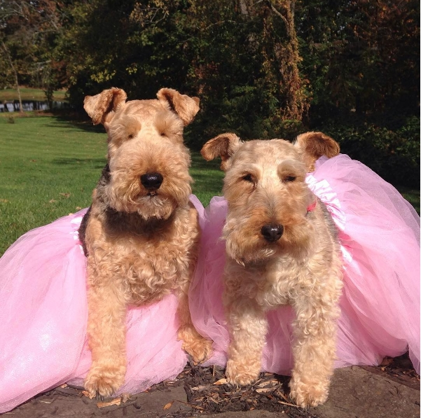 Creative Breast Cancer Fundraiser dare2tutu dogs