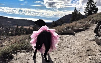 A Tribute to our Furry Friends – Pink Pet Tutu Giveaway