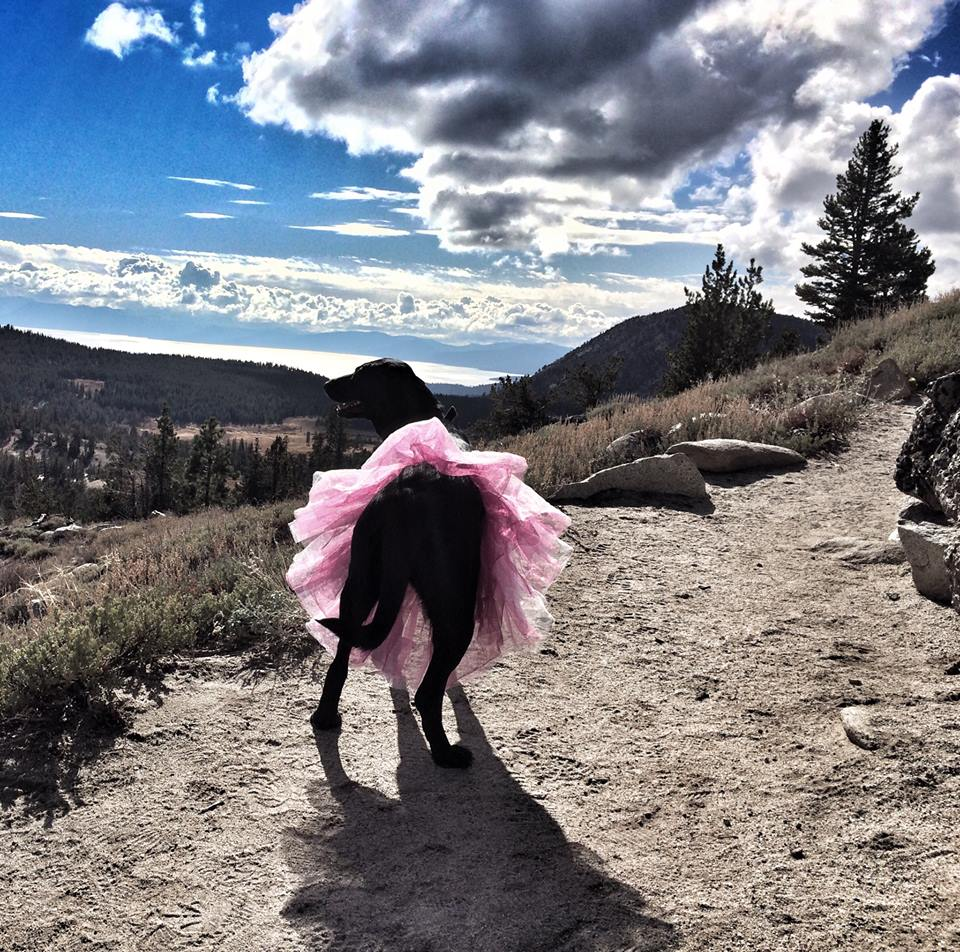 Pets Creative Breast Cancer Fundraiser #Dare2tutu