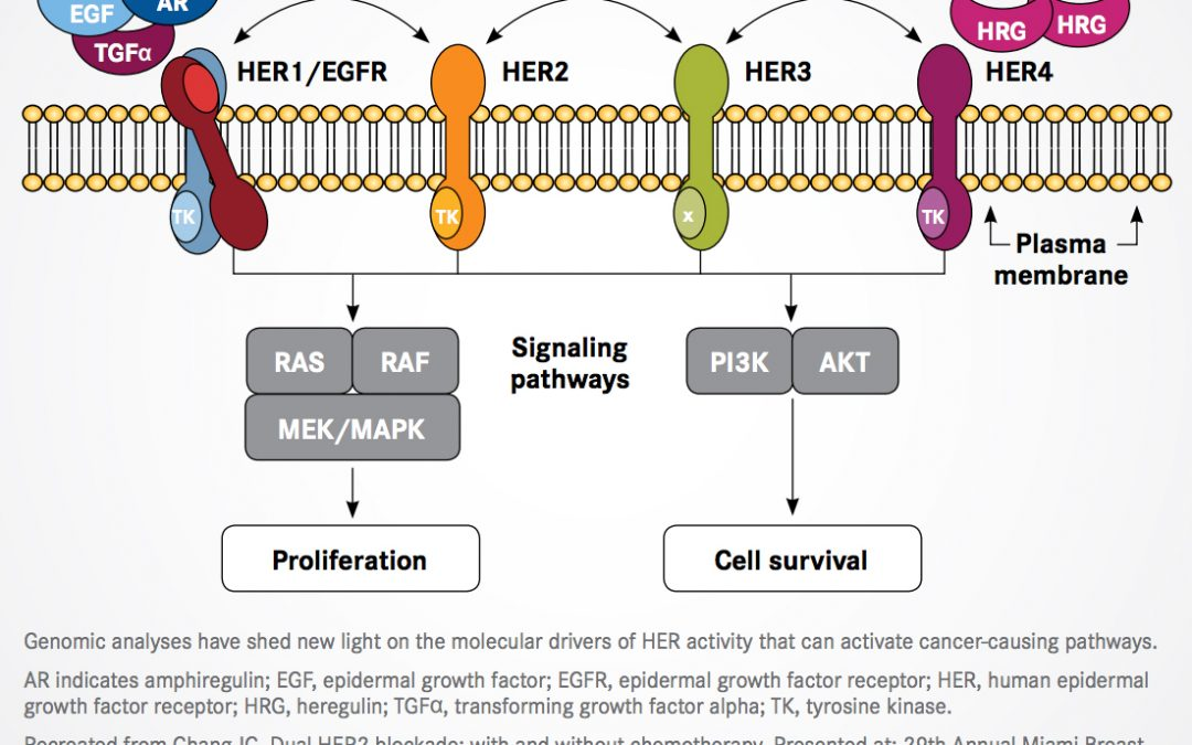 Finding the Right Place for Dual HER2 Blockade in Breast Cancer and Beyond