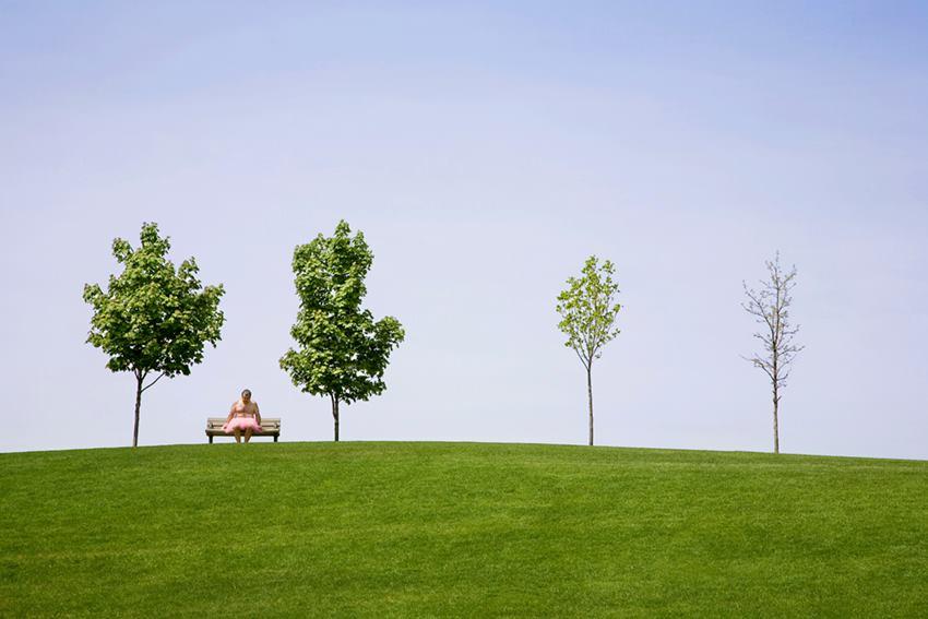 Trees. Frankenmuth, Michigan